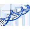 Genes / DNA
