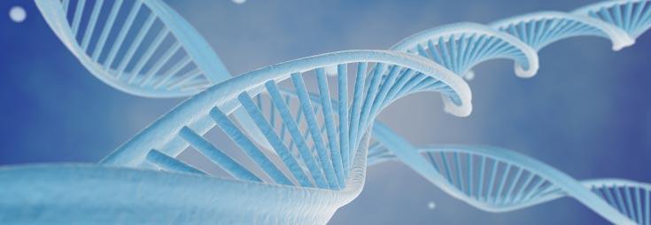 Genetic material / DNA